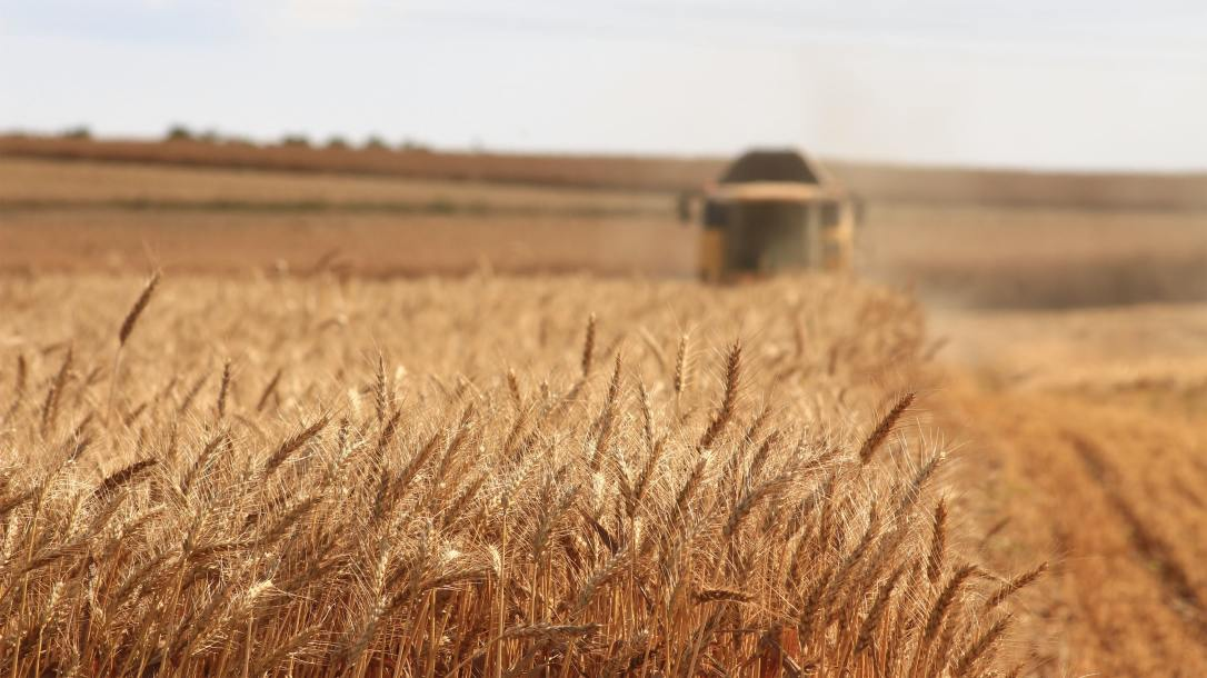 Photograph of a wheat field with a combine harvester in the background.